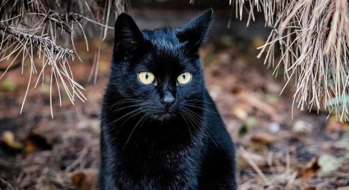 crna maca video.comcrne teen djevojke seks fotografije