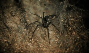 black spider on brown and black surface