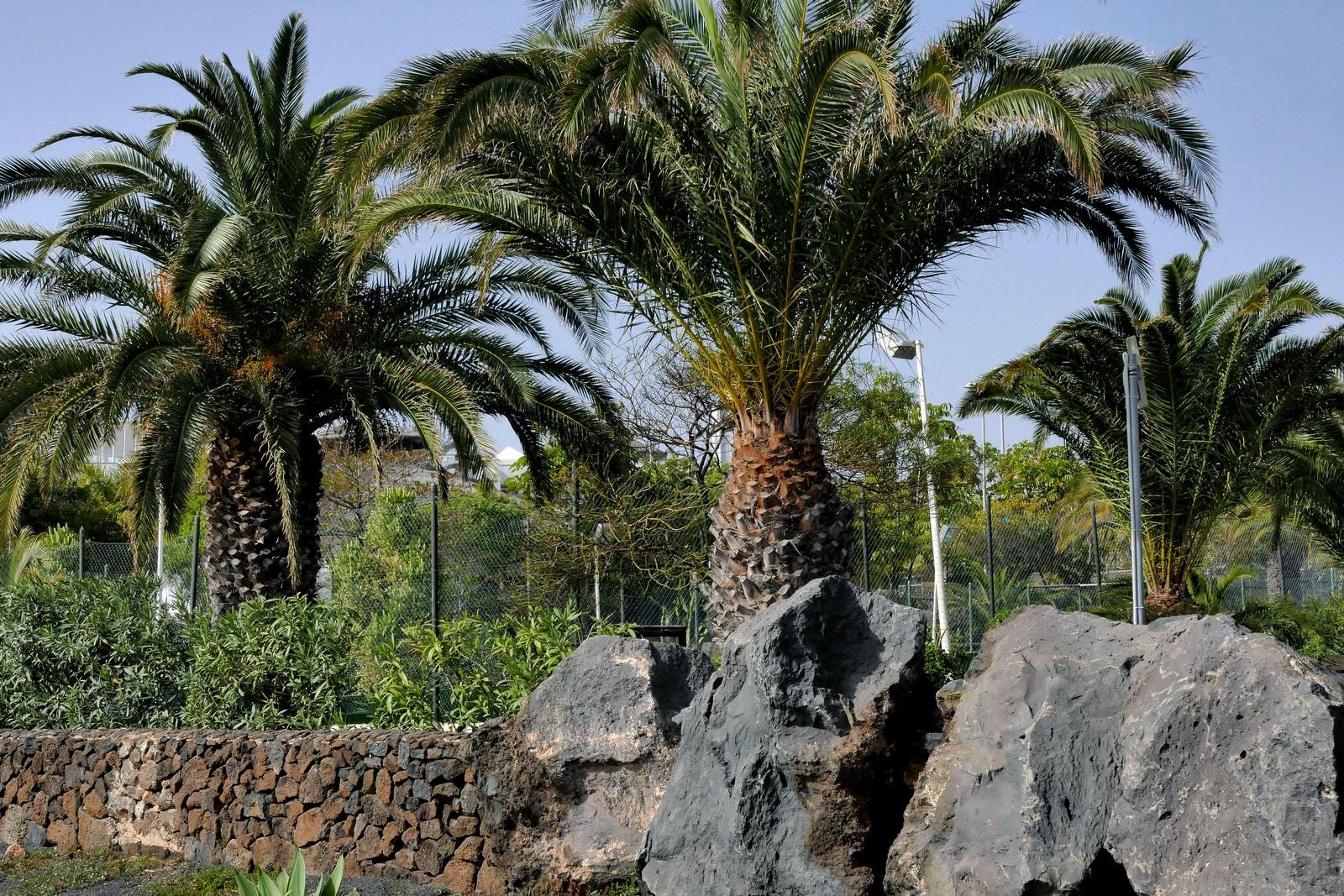 palm tree on gray rock