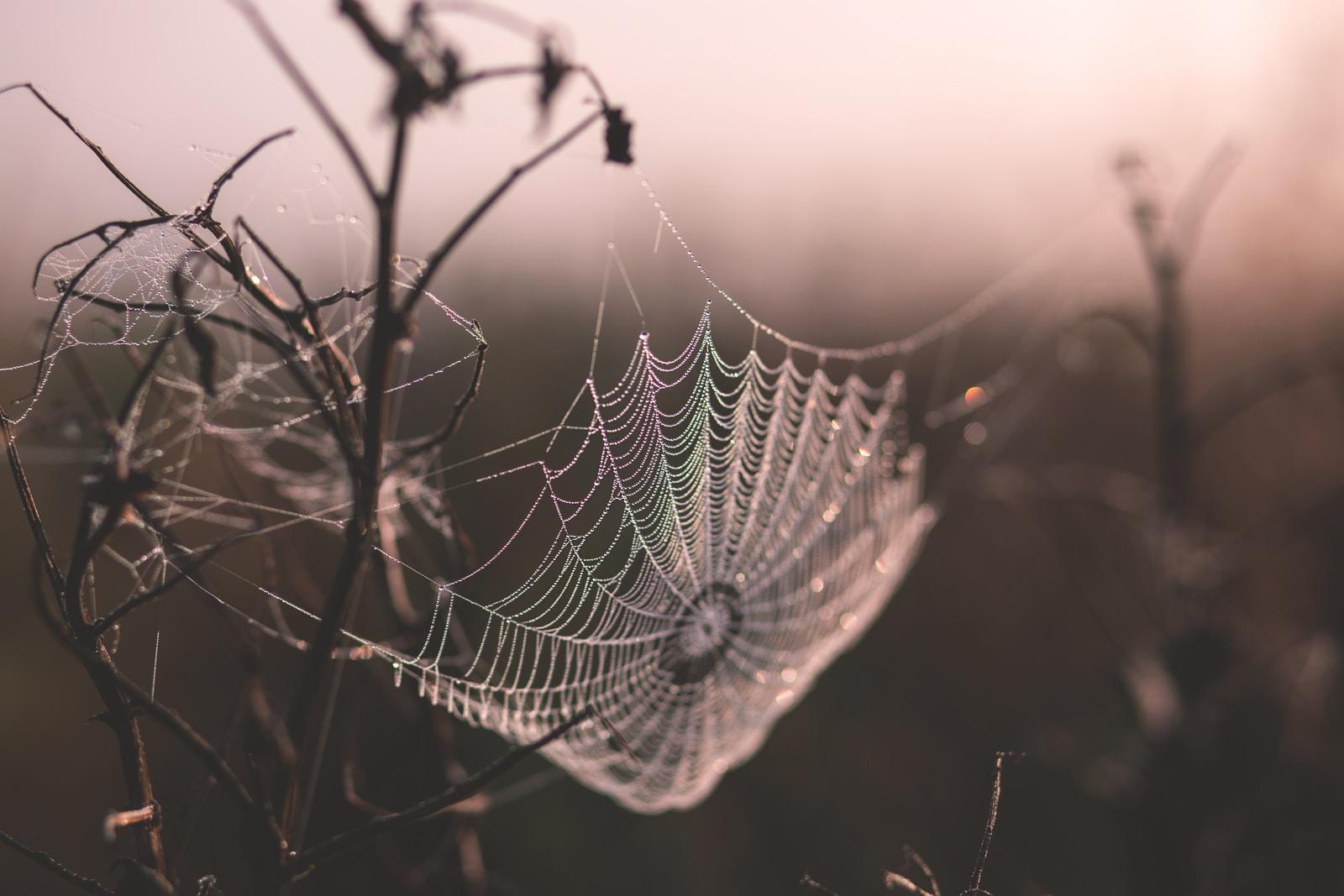 macro shot of spider web